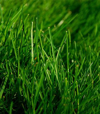 Entretien des pelouses